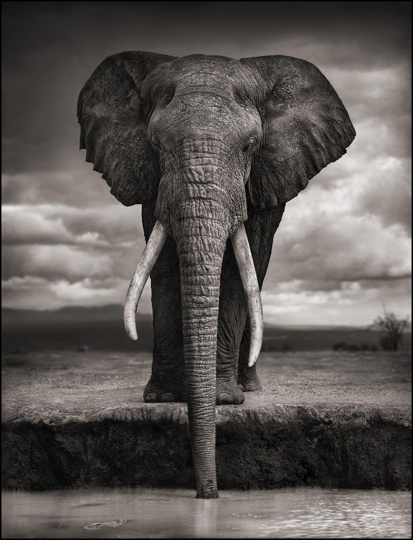 Nick Brandt Photography Dieren Olifant Fotografie Dieren Mooi