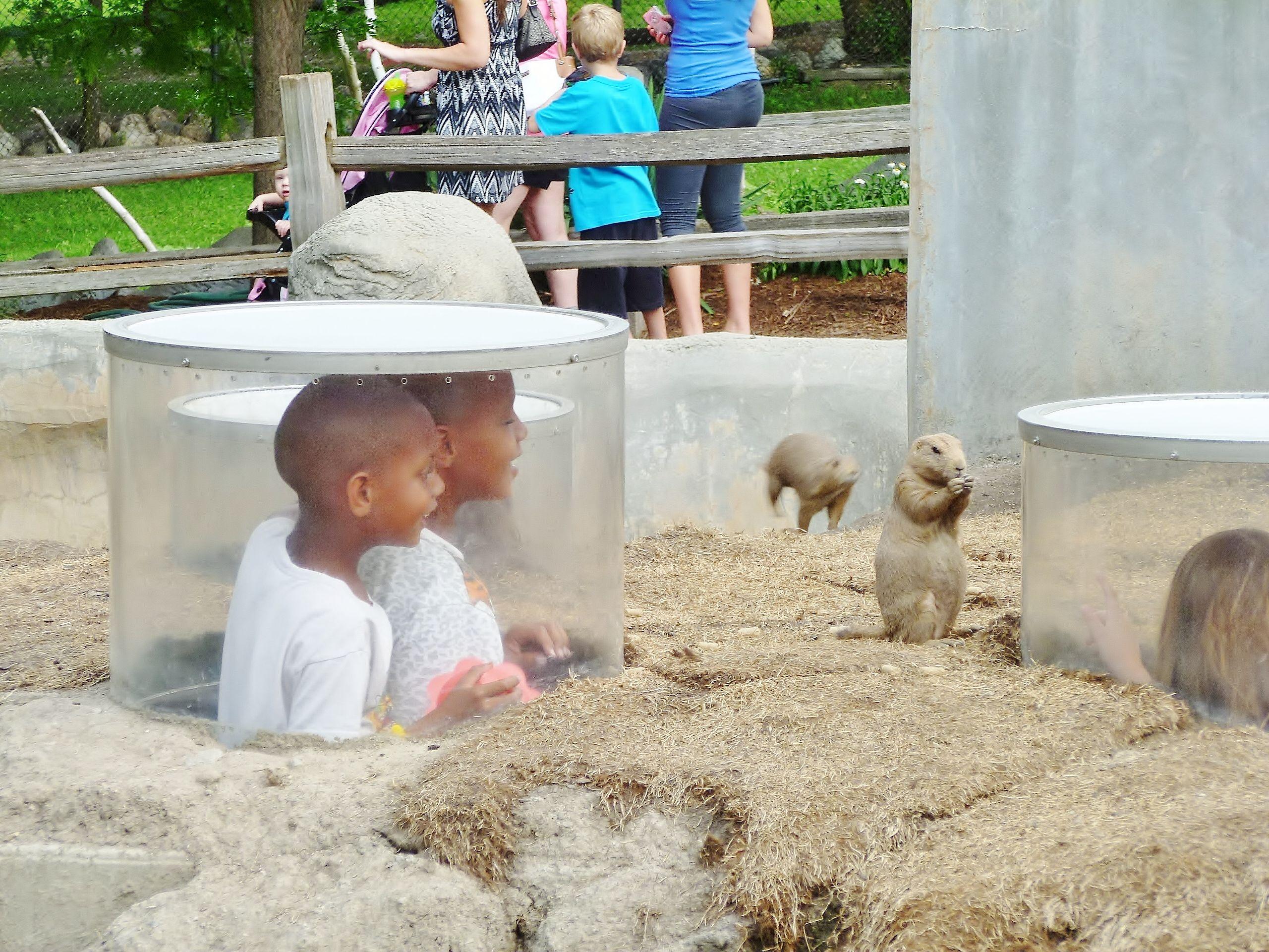 Prairie Dog exhibit Detroit Zoo Royal Oak MI Photo by Kim