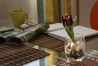 Minitulppaani maitolasissa, todella ihana! #tulppaani #minitulppaani #tulip #small #deco