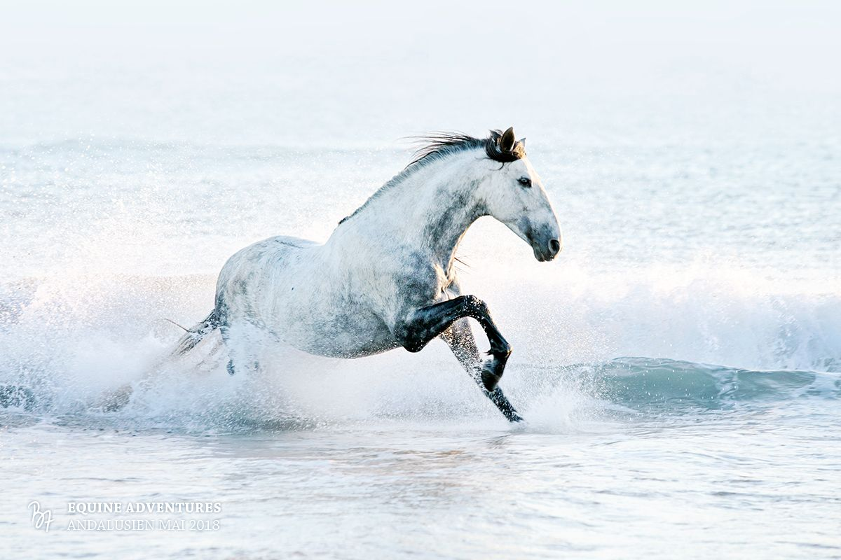 Pferdefotografie | BZ Fotografie