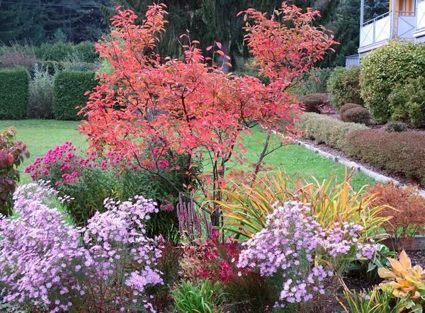 ********************* - Seite 15 - Gartengestaltung - Mein schöner Garten online