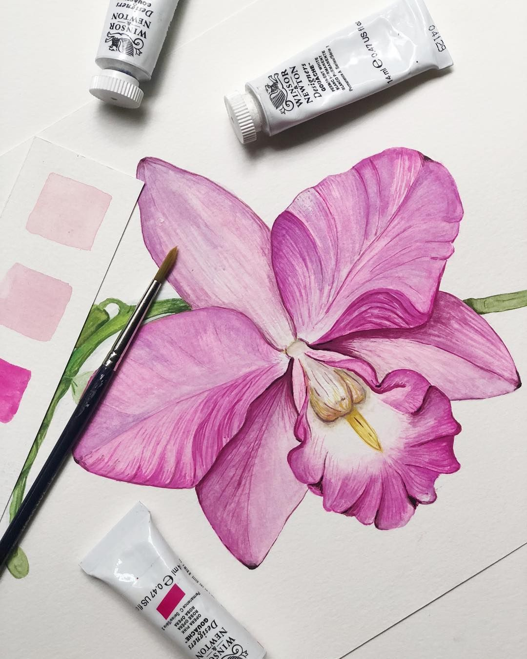 Barda Studio On Instagram The Guaria Morada Orchid Is Costa Rica S National Flower And Also They Ar Watercolor Flowers Tutorial Orchid Drawing Flower Drawing