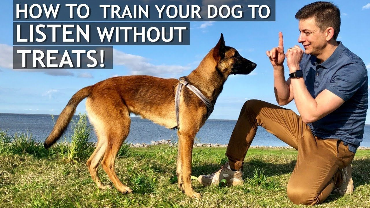 How To Train Your Dog To Listen Without Treats Dog Training