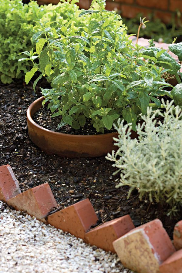Mint - 121 Container Gardening Ideas - Southernliving. Keep more ...