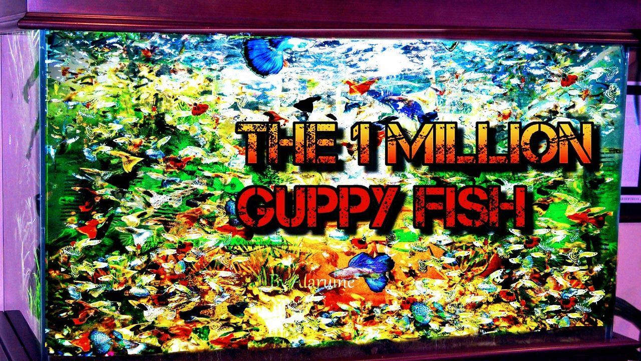 Fish aquarium quotes - The Best Way To Make 1 Million Guppy Fish In Your Aquarium 2017