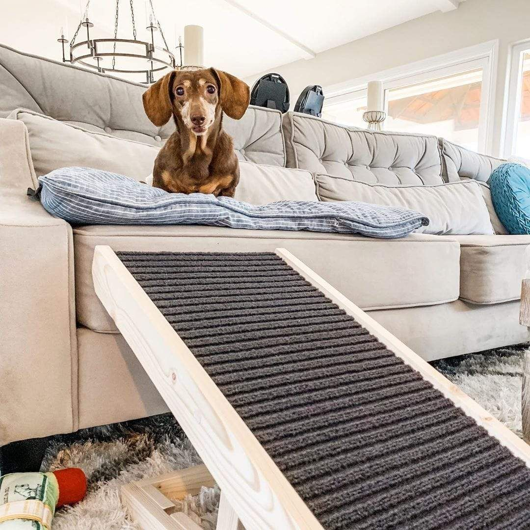 Number One Dog Ramp Specially Made For Your Dachshund Protect Your Hound S Back With Our Portable Dog Ramps With Adjustable H In 2020 Dog Ramp Pet Ramp Dog Car Safety