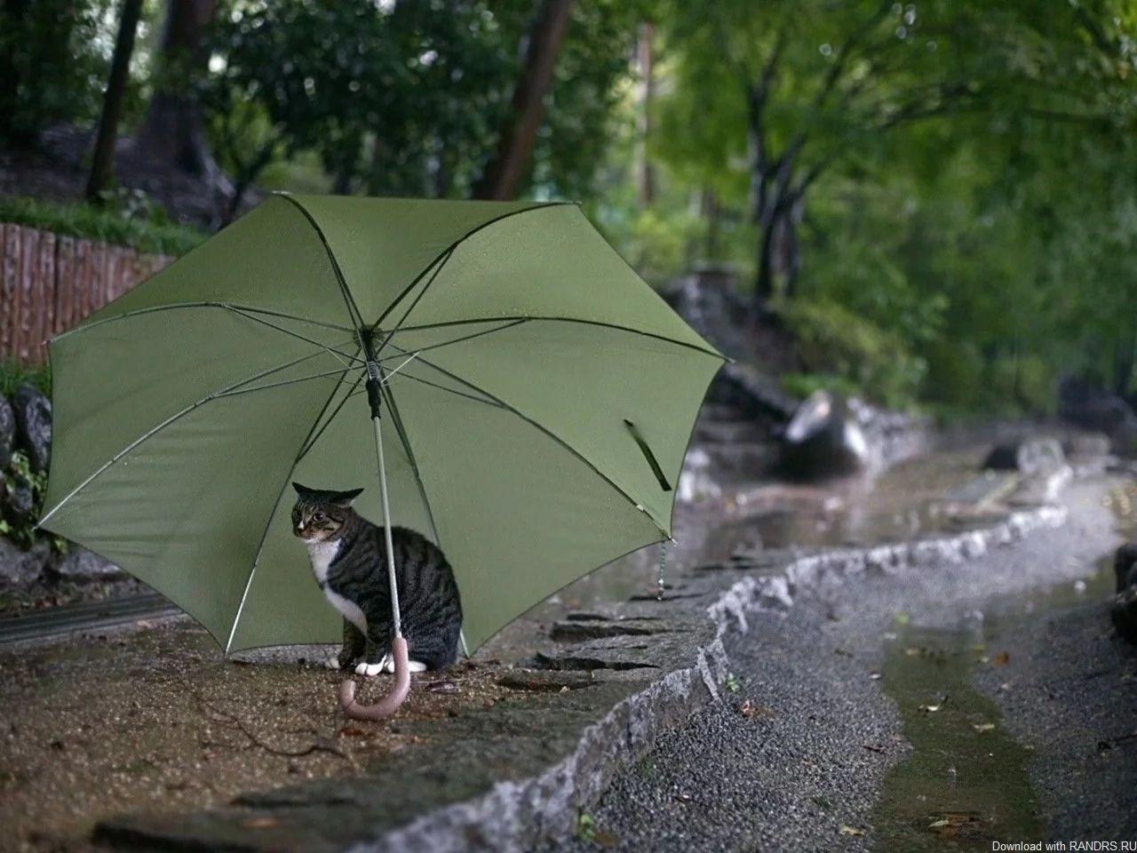 Днем святого, картинки прикольные осень дождь