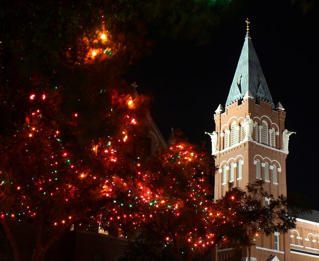 University of the Incarnate Word (UIW)...especially the lights in the trees