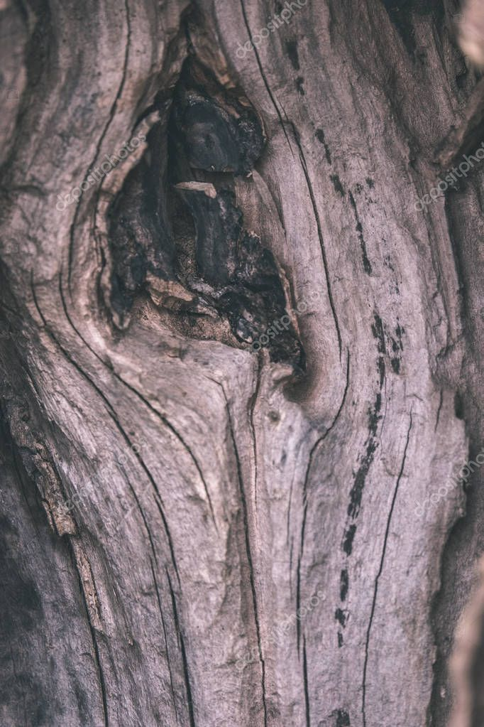Close View Dry Tree Trunk Fallen Broken Tree Age Lines - Stock Photo , #ad, #Tree, #Trunk, #Dry, #Close #AD