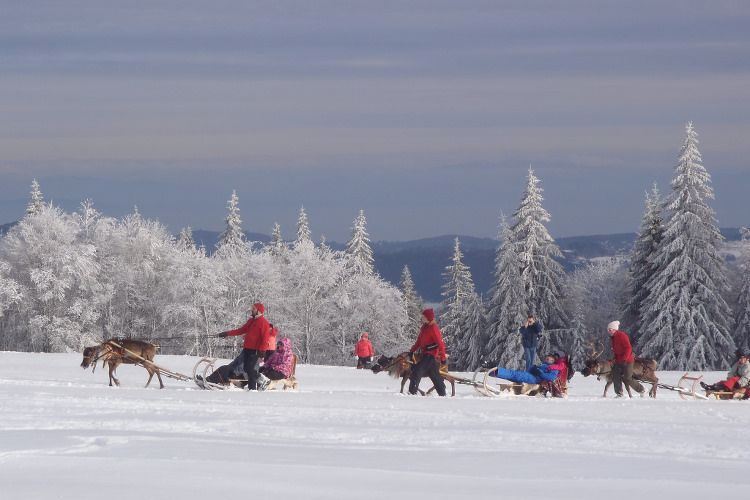 When the beautiful Kaysersberg Valley is covered in white, Alsace takes great northern paces. This is where North Paths us into a ride on the heights of the Vosges ridges on a sleigh pulled by real reindeer Scandinavia. © Kaysersberg Valley Tourism