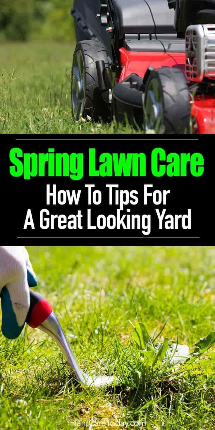 Spring Lawn Care How To Tips For A Great Looking Yard is part of lawn Design Landscaping - Spring lawn care maintenance is key to a great looking yard  It's a long list of things to do which includes applying lawn fertilizer    [READ MORE]