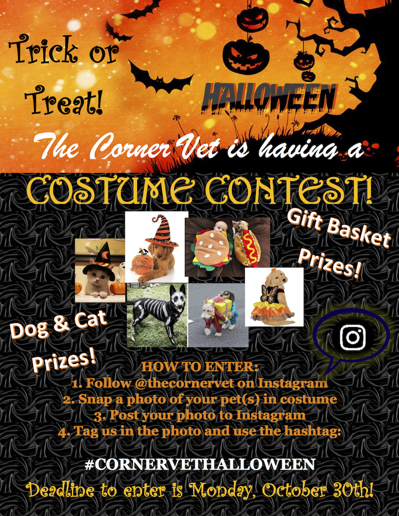 Don't to enter our Instagram Pet Costume Giveaway