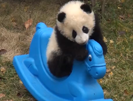 watch this baby panda