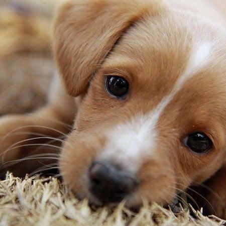 Photo of Entrene a su perro en 15 minutos al día Guíe más de 340 páginas para aprender a …