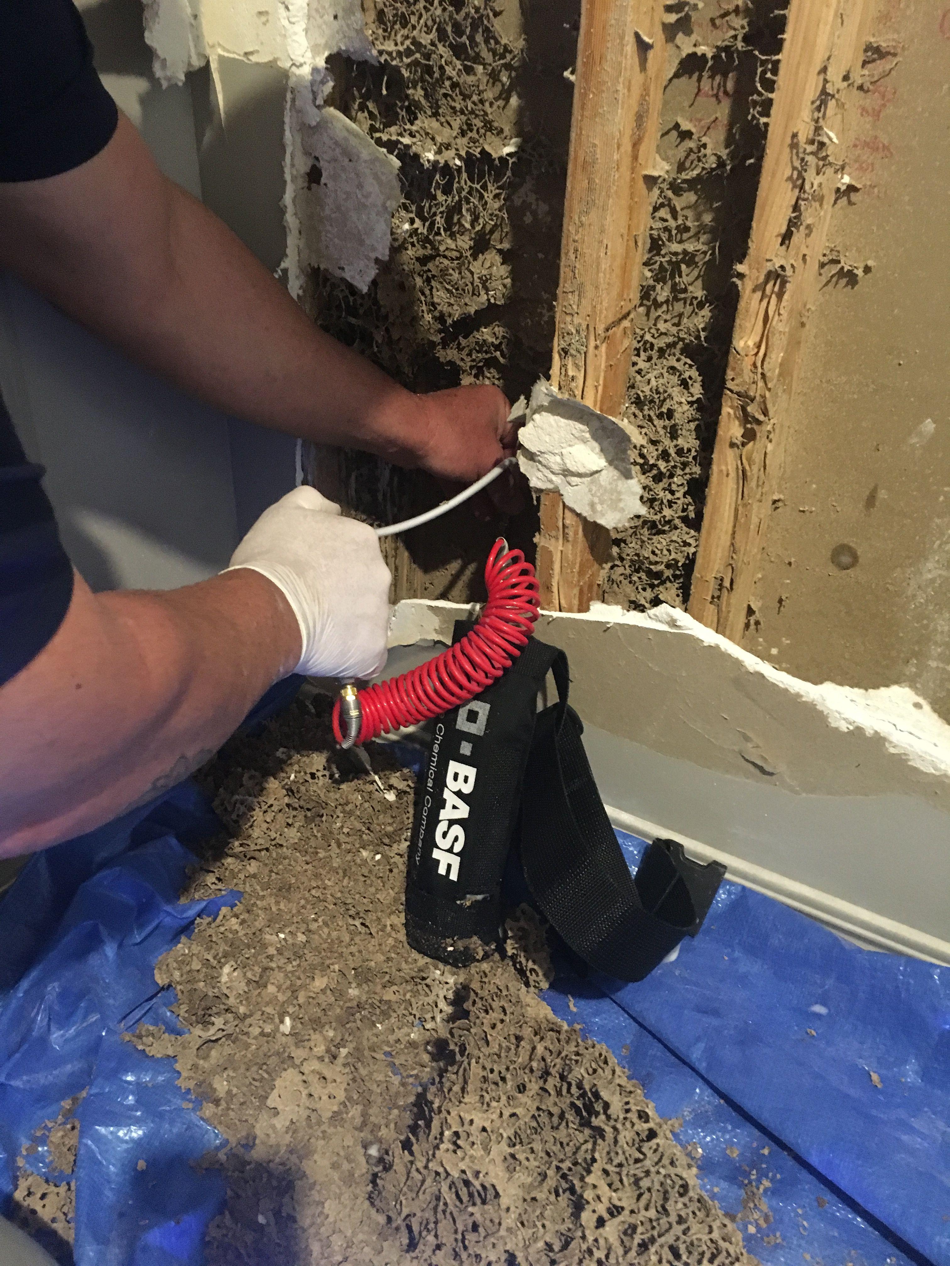 Gallery Bob Gunn Termite Solutions In Brisbane Qld Termites Termite Damage Bob