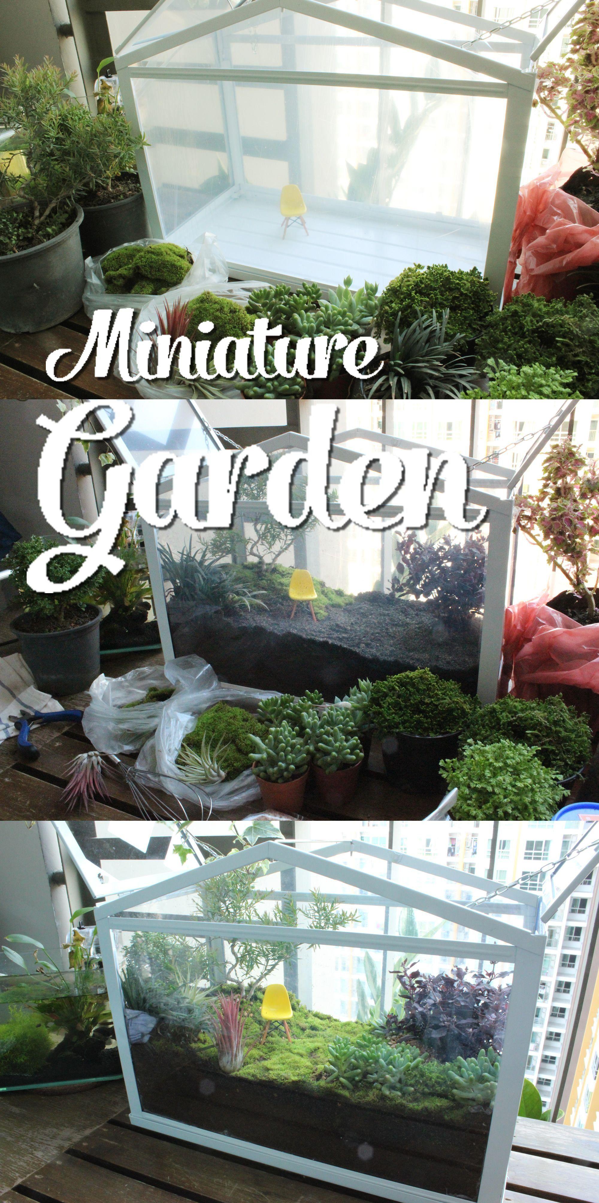 miniature #garden #ikea #glasshouse  9 in 9  Succulent