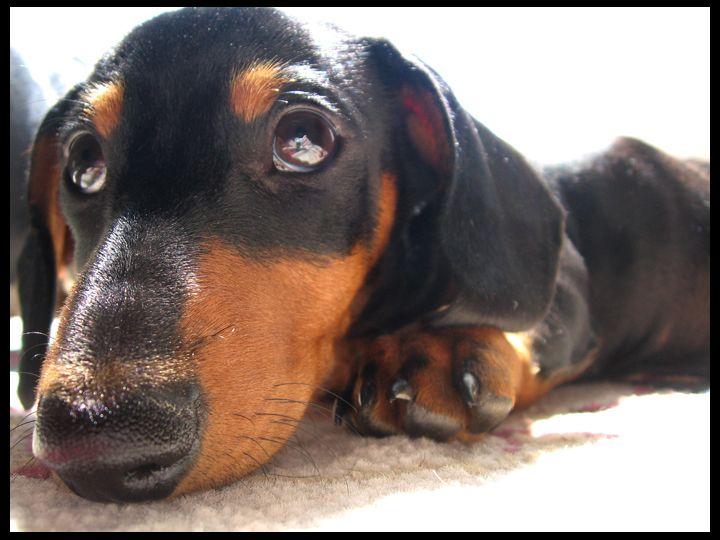 Big Nose Dog Toby By Deracinated Deviantart Com On Deviantart
