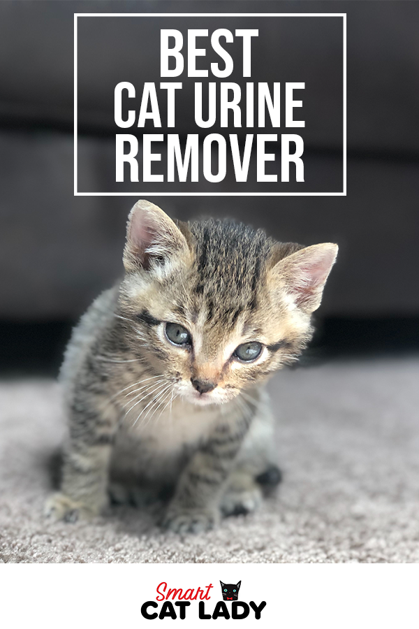 Best Cat Urine Remover From Furniture And Carpet In 2020 With Images Cat Urine Cat Urine Remover Cool Cats