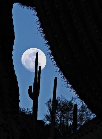 red moon january 2019 utah - photo #44