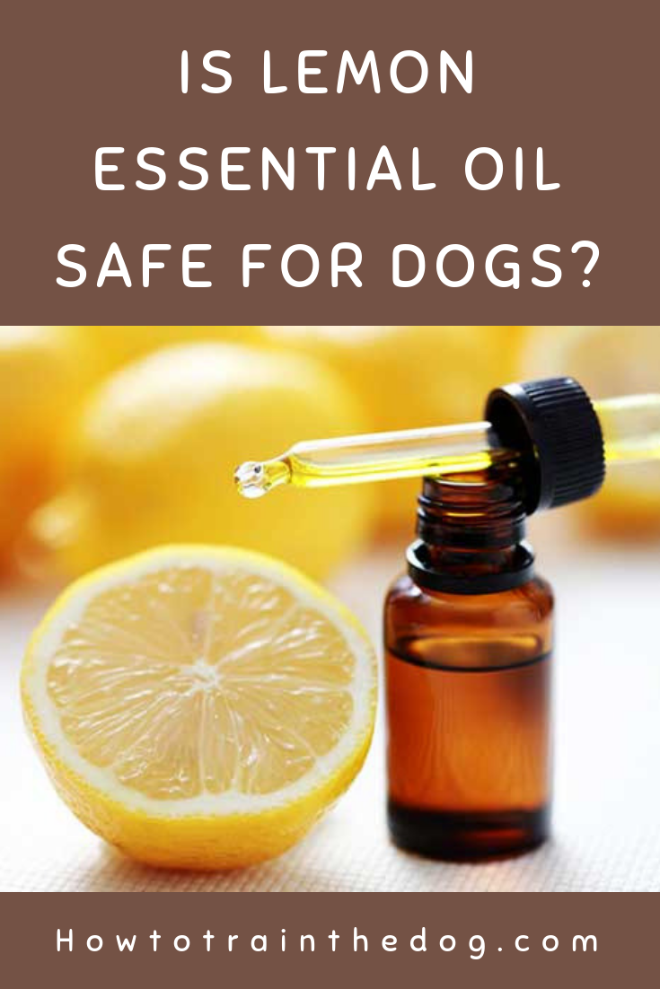 Is Lemon Essential Oil Safe For Dogs How To Train Your Dog Are Essential Oils Safe Oil Safe Lemon Essential Oils