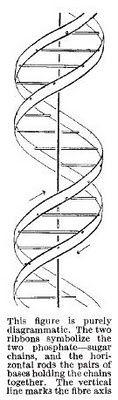 Photo of Watson und Crick, Nature, 1953 Doppelhelixstruktur der DNA