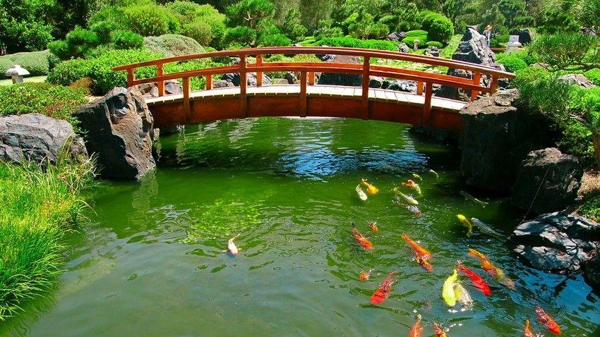 1 3 Stunning Japanese Garden Koi Pond Bridge