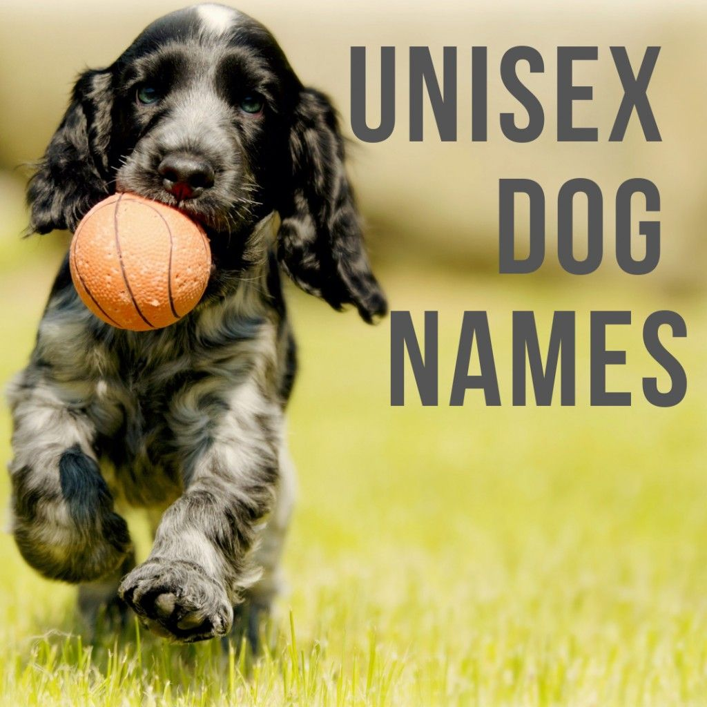100 Unisex Dogs Names That Work For Both Male Female Pets Cute Names For Dogs Dog Names Puppies Names Female