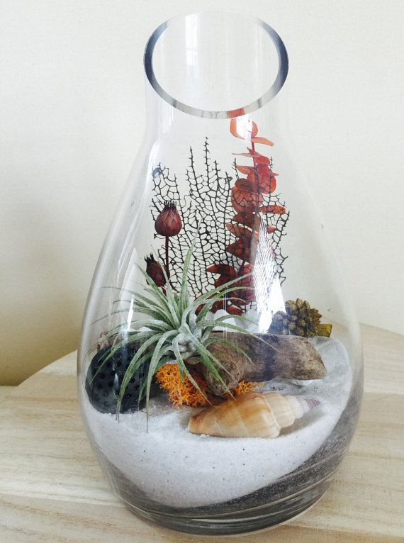 Air Plant Terrarium Sand Art Terrariums Pinterest Air Plants