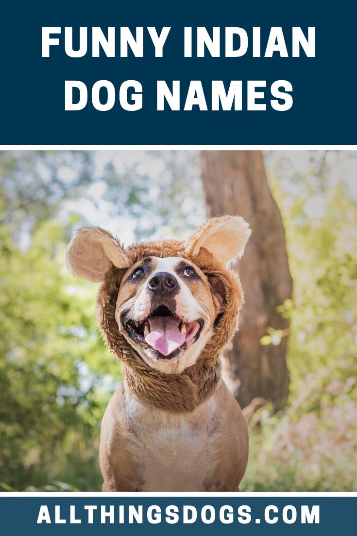 Funny Indian Dog Names Dog Names Funny Dog Names Funny Dogs