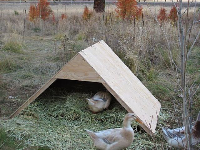 Cold weather tips for winter duck care goose and ducks for Winter duck house