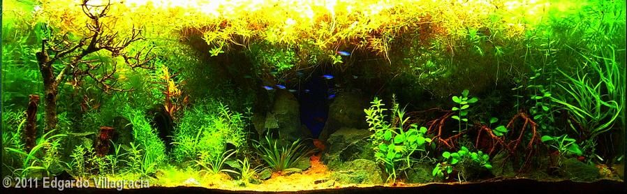 2011 AGA Aquascaping Contest - Entry #60