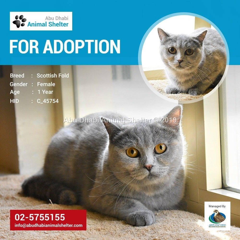 This pet was successfully homed! Feel free to visit our