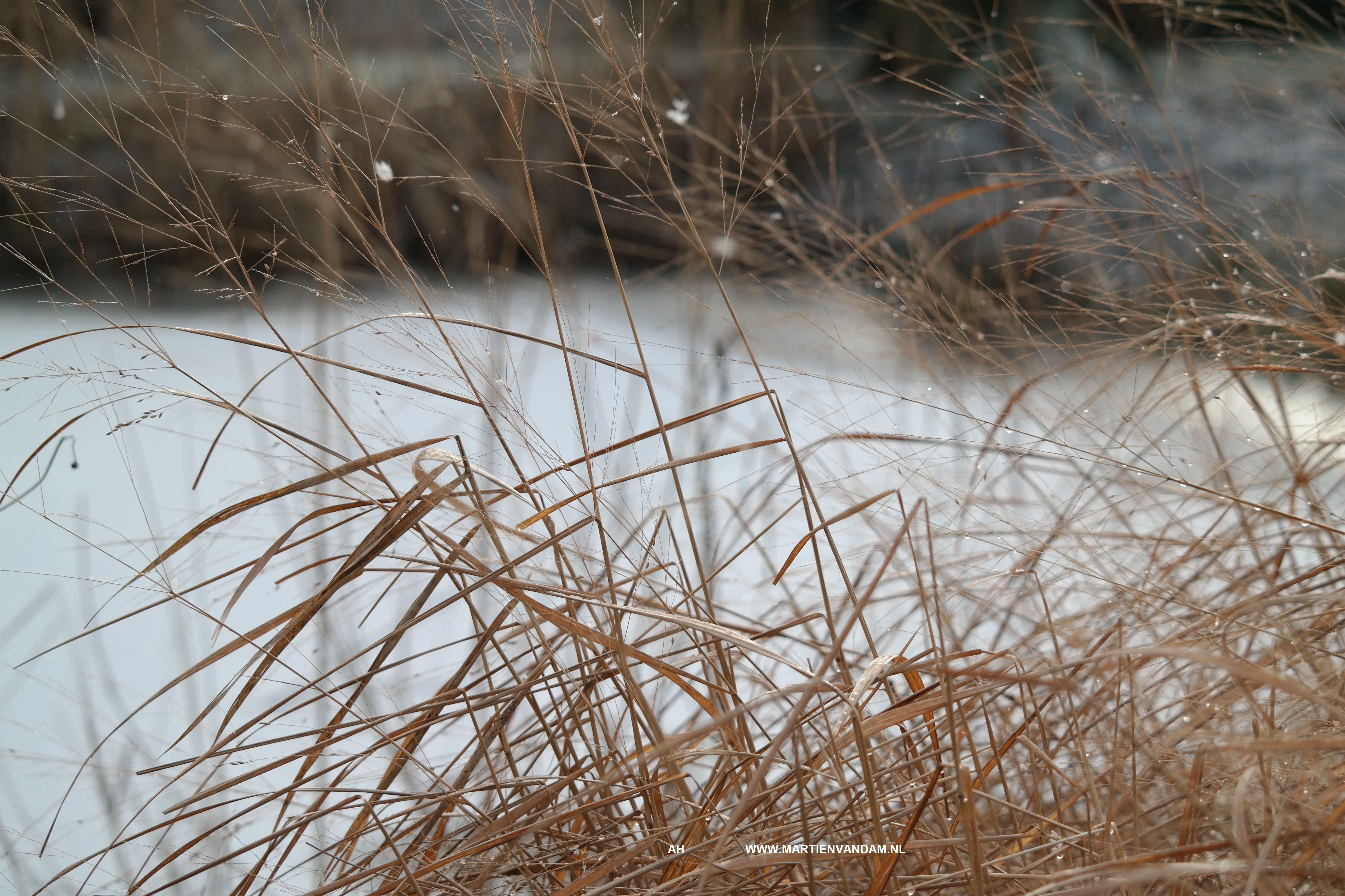 gras winterbeeld – Niet direct de pollen afknippen, dit geeft een kaal beeld in de tuin en ontneemt vogels een schuilplaats!