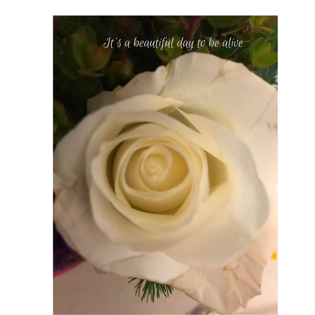 Pin by lauren weds wedding officiant springfield mo on behind the its a beautiful day to be alive this came from a birthday bouquet i received izmirmasajfo