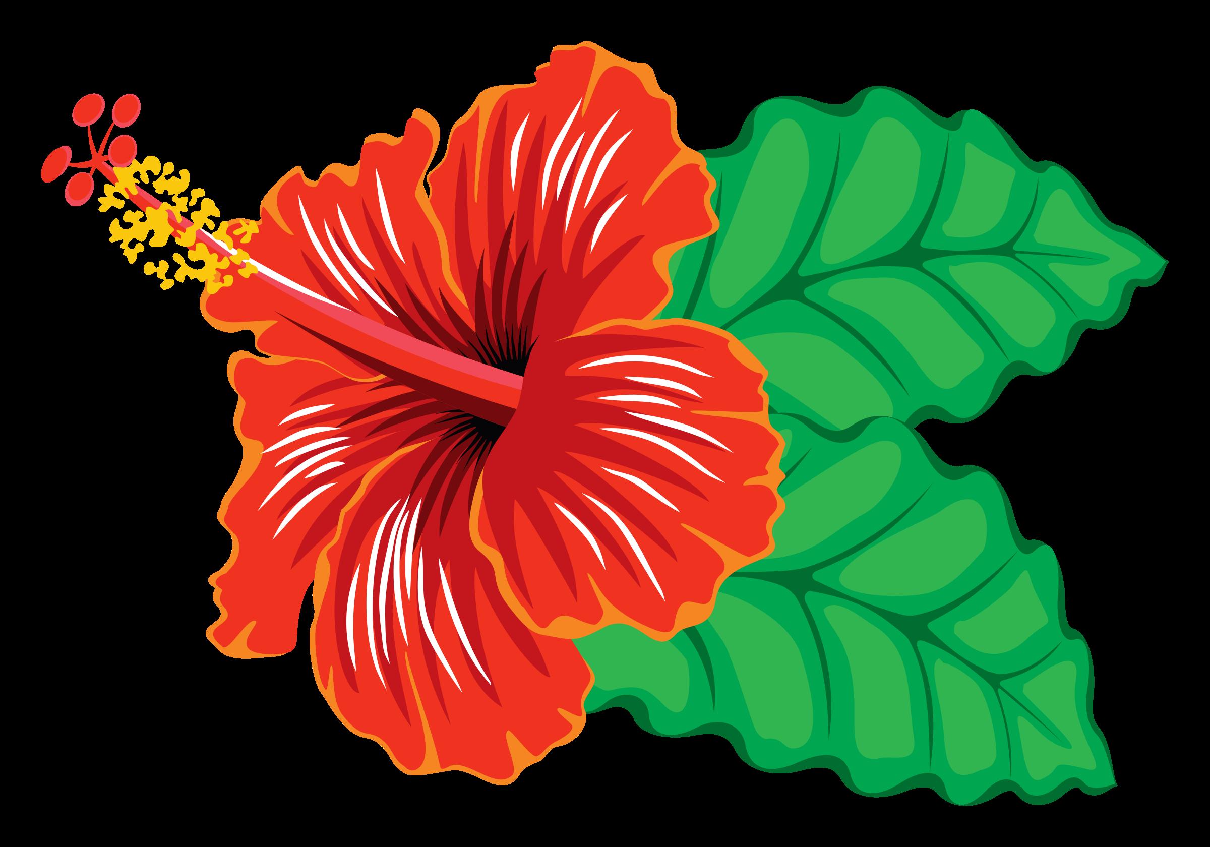 Hibiscus Hibiscus Flower Art Hibiscus Flowers