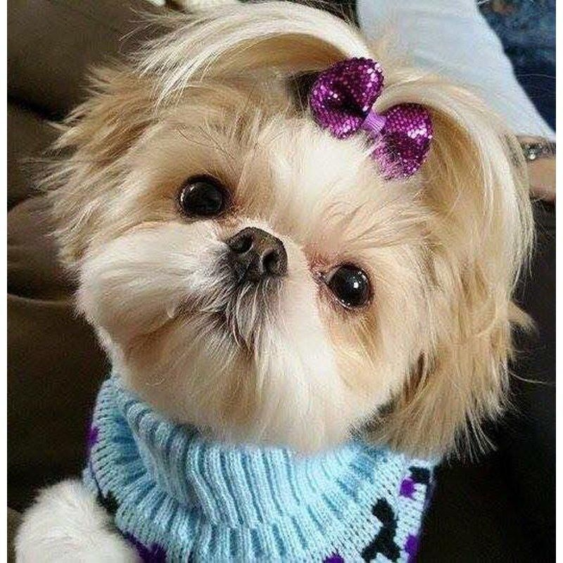 Diamond Painting Cute Shih Tzu Dog Hairstyle Trends Shih Tzu