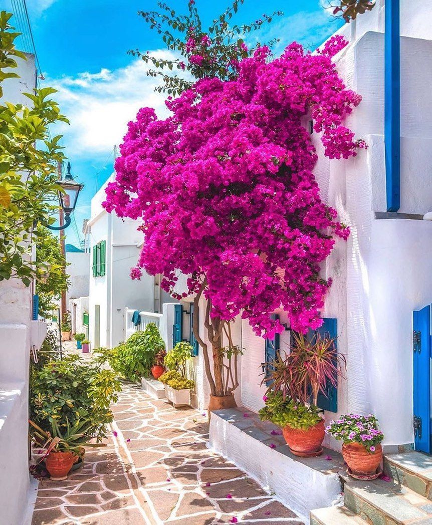 Top 10 Tourist Attraction To Visit In Greece Tour To Planet In 2021 Greece Landscape Beautiful Gardens