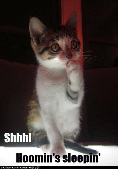 Ginger Crystal Cats Ajman Adopt My Pets Pets Adoption Cats