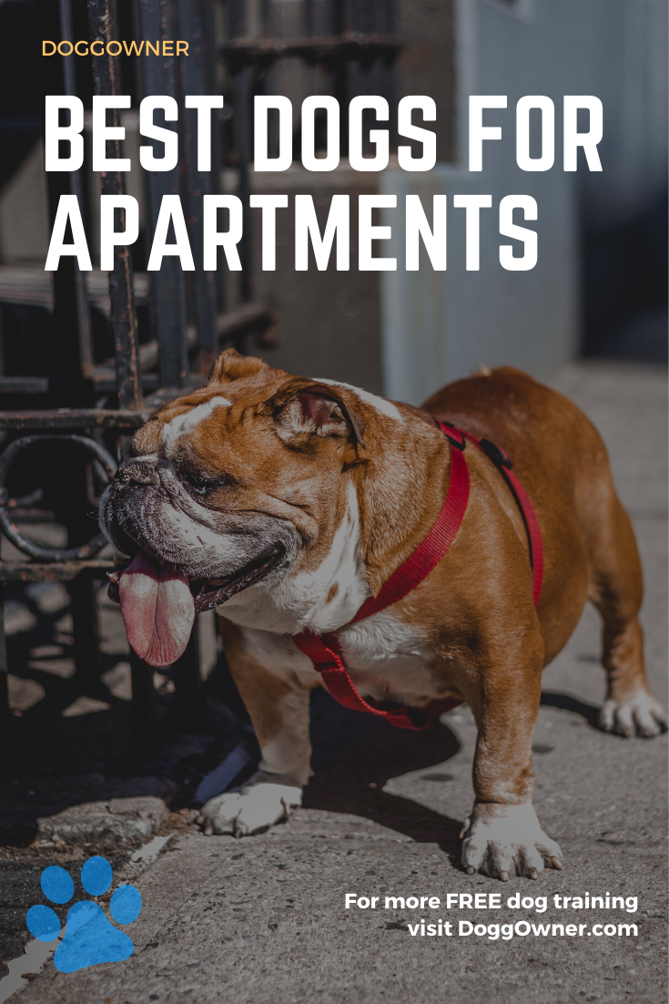 Best Dogs For Apartments Best Apartment Dogs Friendly Dog