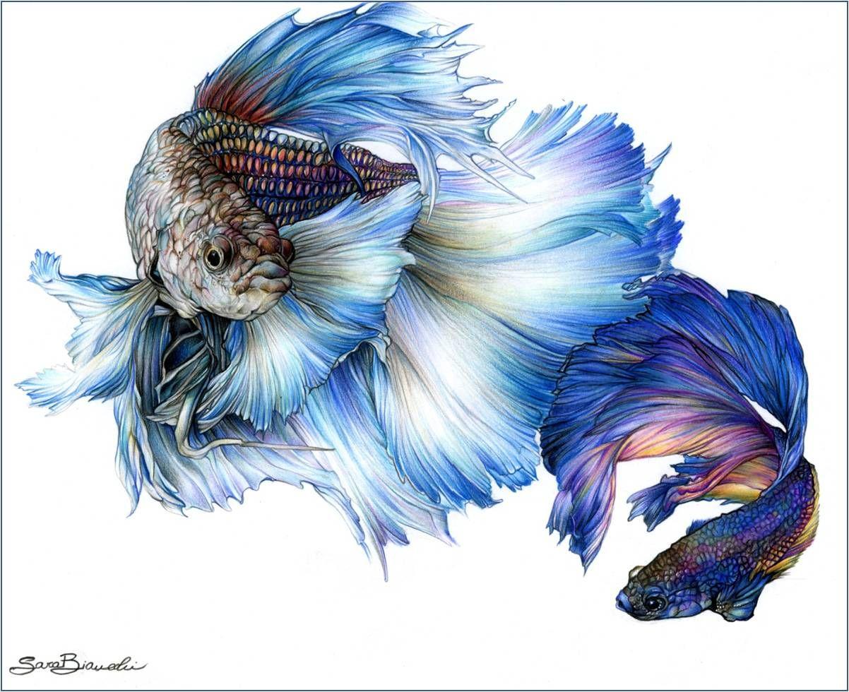 Disegni artistici colorati cerca con google art for Disegni a matita di cani