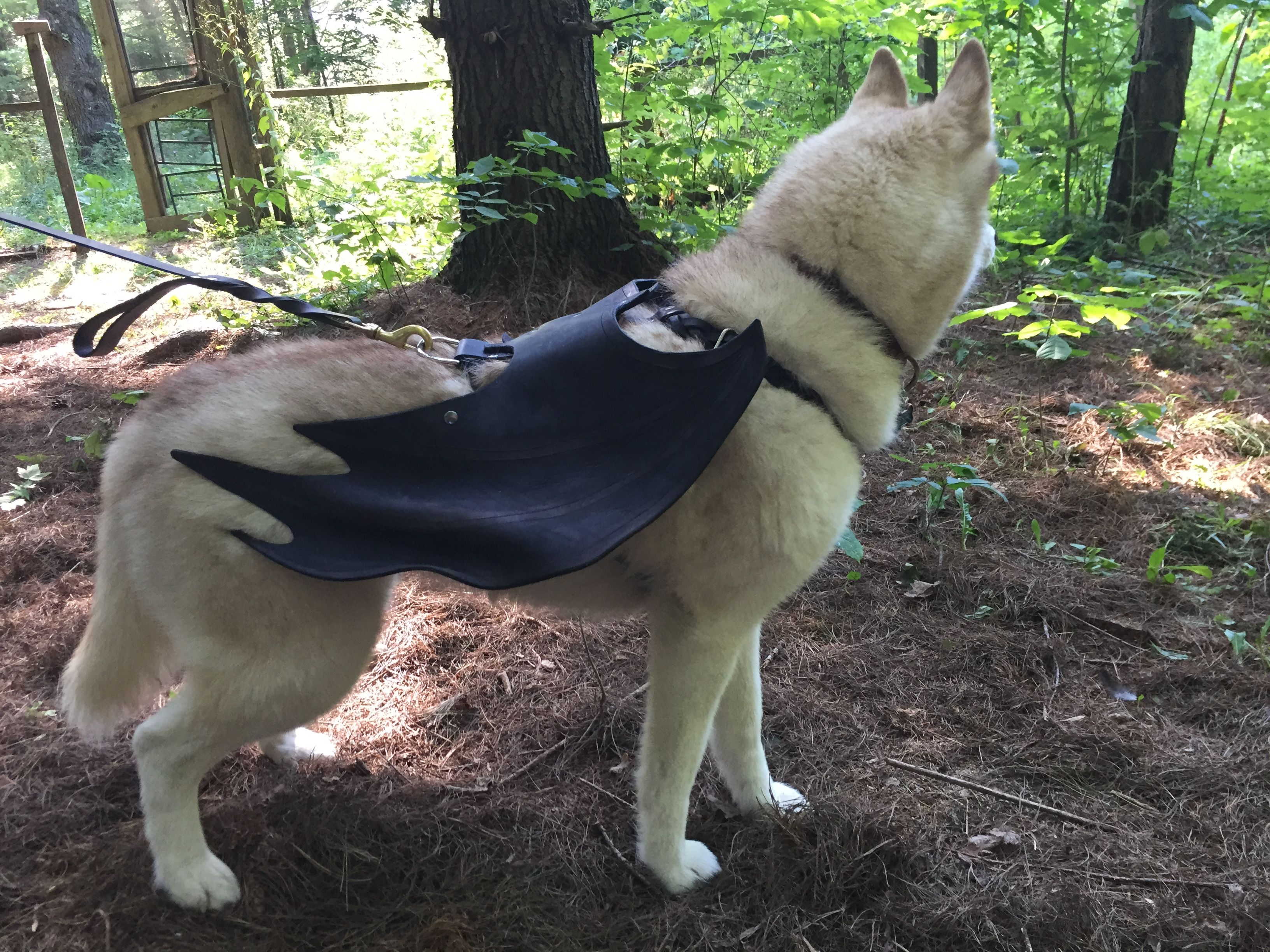 Handmade Leather Dog Costume Bat Wings By Frost Ember Creations