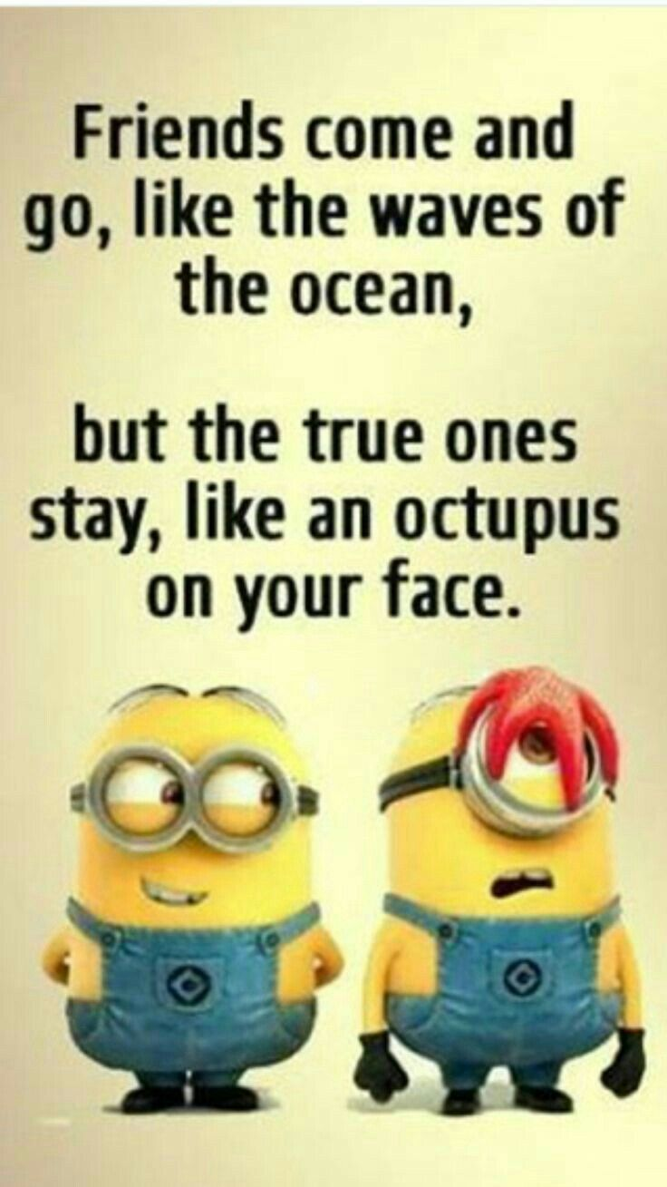 31 minion quotes for lols minionpictures