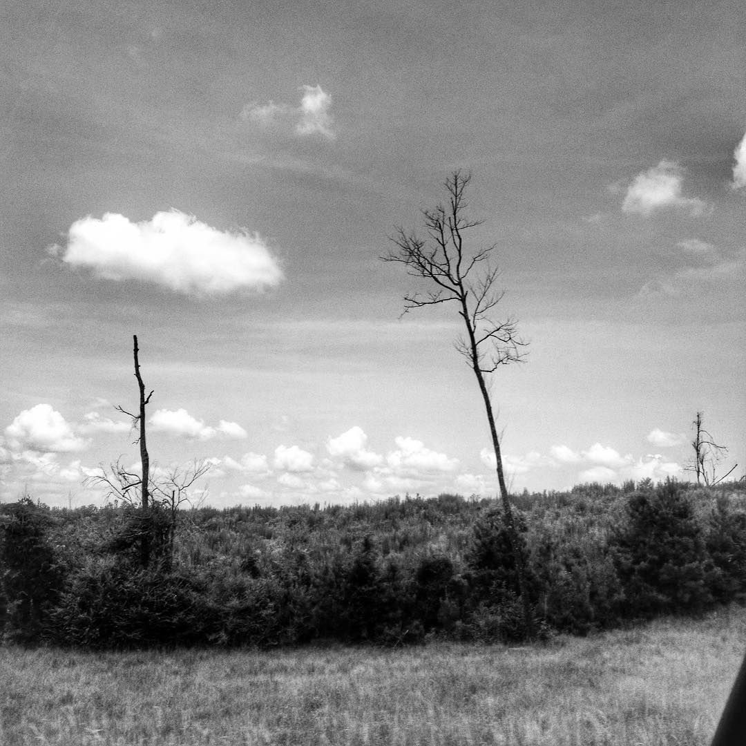 Two Barren Trees And A Puffy Cloud Louisiana Blackandwhitephotography Blackandwhite Bnw Bnwphotography L In 2020 Instagram Landscape Photography Bnw Photography