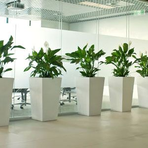 Indoor Office Plants Google Search