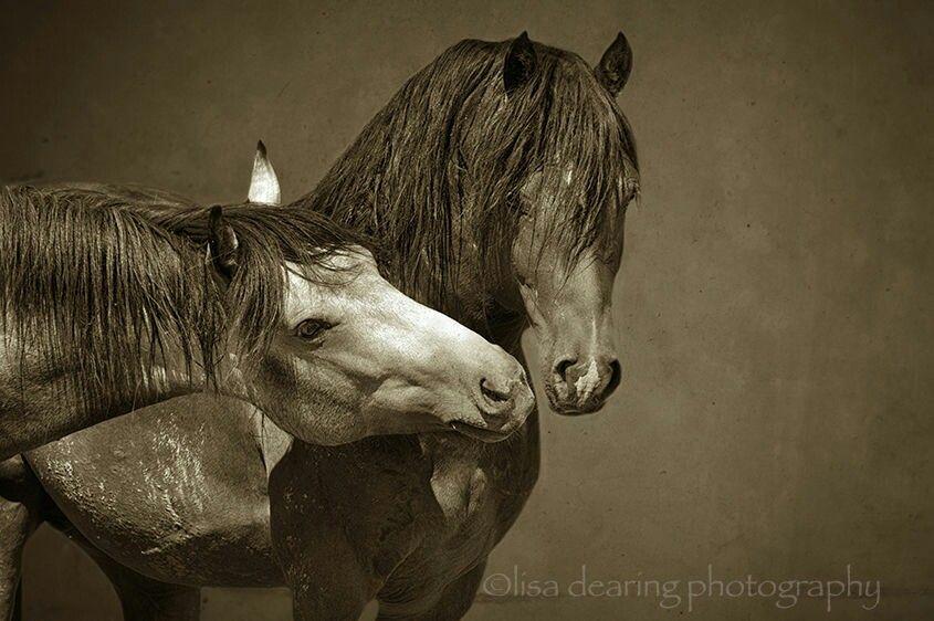 Pin by G pretorius on Horses Horses, Pretty horses