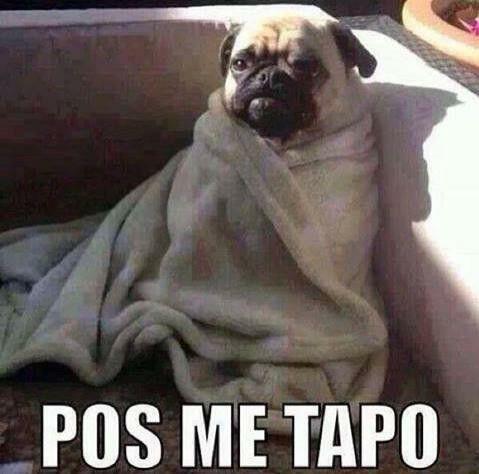 Pos Me Tapo Memes De Frio Memes Imagenes De Animales