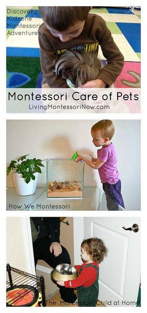 Montessori Care Of Pets Homeschool Preschool Activities Montessori Lessons Montessori Activities