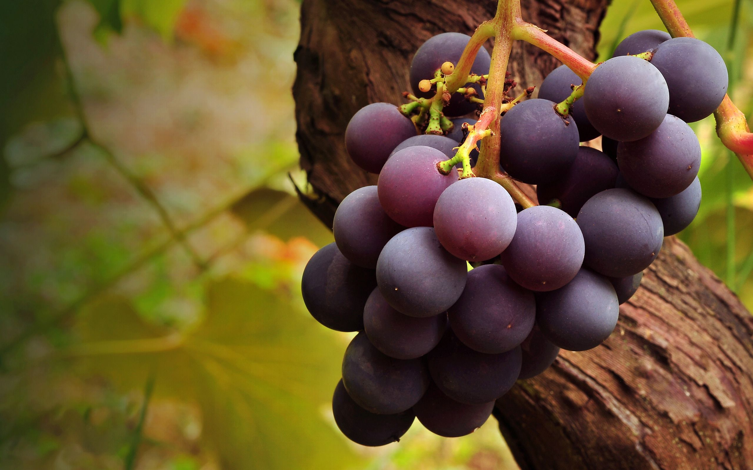 Grapes Wallpapers Hd Wallpapers Laptop Wallpapers Green Grapes Nutrition Grape Wallpaper Grapes