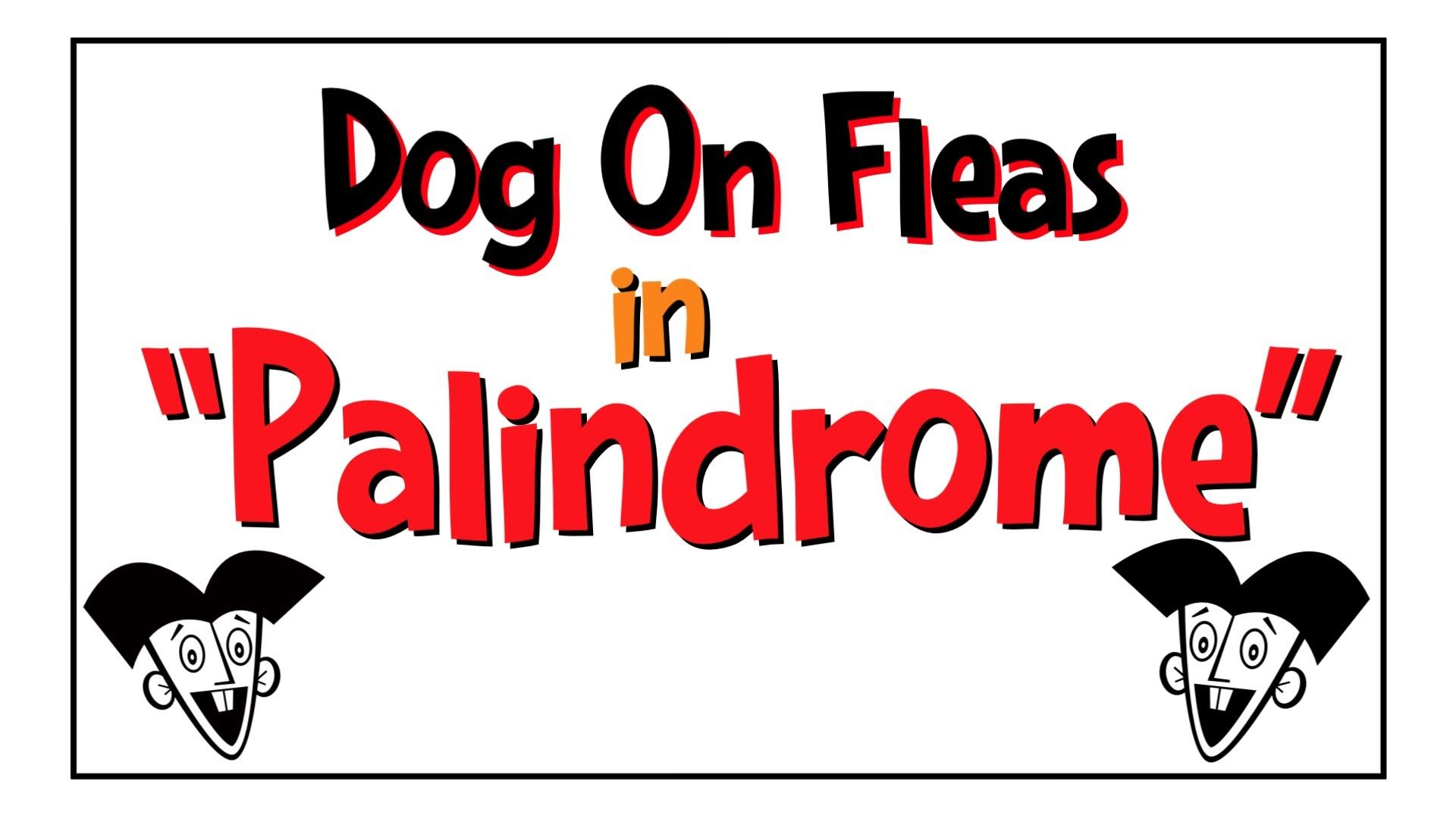 Learn All About Palindromes Fleas Learning Stations Dogs