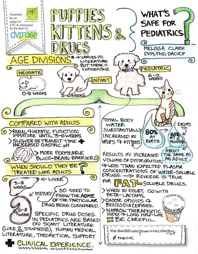 CVC doodle How to make safe drug choices for tiny pups